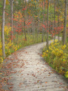 Ann Horn - Winding Woods Walk