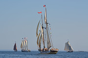 Tall Ships Prints - Windjammers on Parade Print by Phyllis Fales