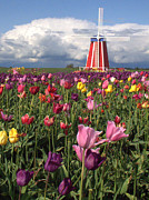 Suzy Piatt - Windmill in the Tulips