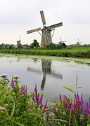 Dutch Landscape Posters - Windmills of Kinderdijk with Flowers Poster by Carol Groenen