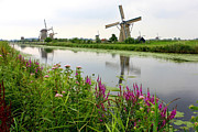 Windmills Of Kinderdijk With Wildflowers Print by Carol Groenen