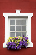 Flowers Picture Framed Prints - Window and Walls Triptych - Canvas 2 Framed Print by Natalie Kinnear