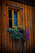 Salzkammergut Framed Prints - Window Box Framed Print by David Waldo