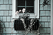 Flower Basket Framed Prints - Window Dresser Framed Print by Bonnie Bruno