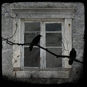 Corvidae Prints - Window Dressing Print by Gothicolors And Crows