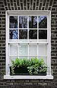 Old Houses Framed Prints - Window in London Framed Print by Elena Elisseeva