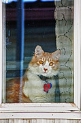 Dan Quam - Window kitty