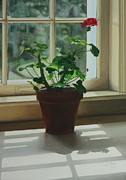 Clay Paintings - Window Light Geranium by Nancy Teague