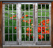 Guy Harnett - Window Of Poppies