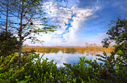 River Scenes Photos - Window to the Everglades by Debra and Dave Vanderlaan