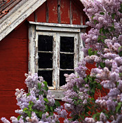 Cabin Window Originals - Window with Lilacs by Alison Gunn