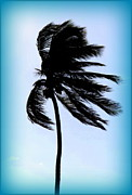 Coconut Palms Prints - Winds Of Blue Print by Karen Wiles