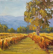 Sonoma County Originals - Windsor Vineyard by Inka Zamoyska