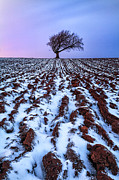 Snow Photo Prints - Windswept Tree Scotland Print by John Farnan