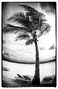 Windy Palm Print by John Rizzuto