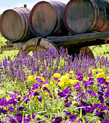 Purple Flowers Digital Art Prints - Wine Barrels at V. Sattui Napa Valley Print by Michelle Wiarda