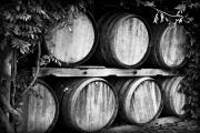 Ice Wine Prints - Wine Barrels Print by Scott Pellegrin