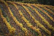 Mitch Shindelbower - Wine Country Autumn