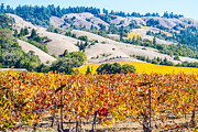 Brian Williamson - Wine country Napa C.A.