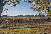 Wine Vineyard Photo Originals - Wine Country by Stephen Dilley
