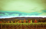 Vineyard Landscape Posters - Wine in Time Poster by Ryan Hartson-Weddle