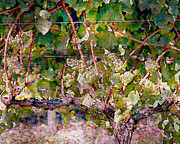 Nudes Digital Art Prints - Wine On The Vine I Print by Ken Evans
