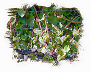 Nudes Digital Art Prints - Wine On The Vine II Print by Ken Evans