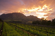 Vineyard Landscape Posters - Wineland Sunrise Poster by Aaron S Bedell