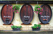 Alsace Framed Prints - Wines of Alsace Framed Print by Dave Mills