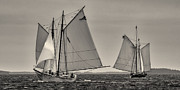 Schooners Framed Prints - Wing and Wing Framed Print by Fred LeBlanc