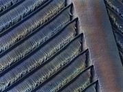 Wing Feather Detail Of Swallow Sem Print by Science Photo Library