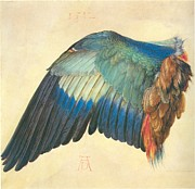 Albrecht Durer Prints - Wing of a Blue Roller 1512 Print by Albrecht Durer