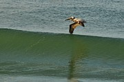 Wibada Photo Prints - Wing Surfer Print by Lynda Dawson-Youngclaus