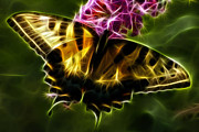 Butterfly Photographs Posters - Winged Beauty Poster by Joann Copeland-Paul