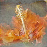 Pink Hibiscus Posters - Winged Surprises Poster by Sharon Mau