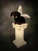 Dog Prints Digital Art - Wings by Denise Oldridge