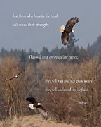 Bible Verse Photos - Wings Like Eagles by Angie Vogel