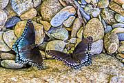 Barry Jones - Wings on the Rocks