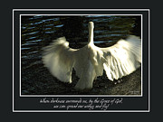 Spread Framed Prints - Wings To Fly Framed Print by Carolyn Marshall