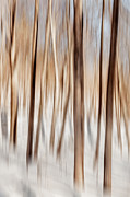 Woodland Scenes Photo Posters - Winter Abstract Poster by Bill  Wakeley