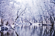 Bill Cannon Framed Prints - Winter Along the Wissahickon Creek Framed Print by Bill Cannon
