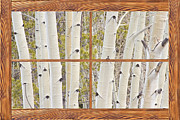 Gift Ideas Posters - Winter Aspen Tree Forest Barn Wood Picture Window Frame View Poster by James Bo Insogna