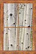 Room With A View Photos - Winter Aspen Tree View Through a Barn Wood Picture Window Frame by James Bo Insogna