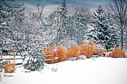 Winter Scene Digital Art Prints - Winter Beauty Print by Mary Timman