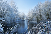 Frozen River Posters - Winter Beauty Poster by Svetlana Sewell