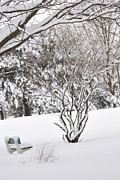 Frederico Borges Photo Posters - Winter bench Poster by Frederico Borges