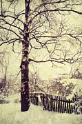 Christmas Scene Prints - Winter Birch Print by Jenny Rainbow