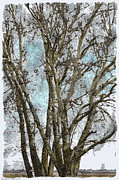 Painted Mixed Media - Winter Birch Trees Photoart by Debbie Portwood