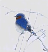 Ice On Branch Prints - Winter Bird Blues Print by Kemberly Duckett