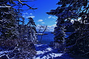 Bar Harbor Acrylic Prints - Winter Blue Acrylic Print by David Rucker